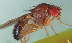 Bonide Mosquito Control